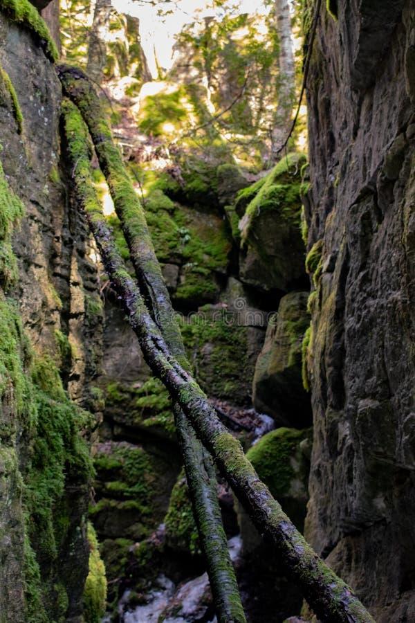 Grietas en Bruce Trail fotos de archivo