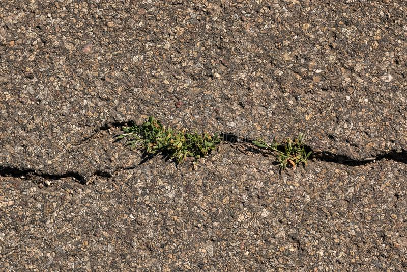 Grietas en el asfalto con la hierba creciente imágenes de archivo libres de regalías