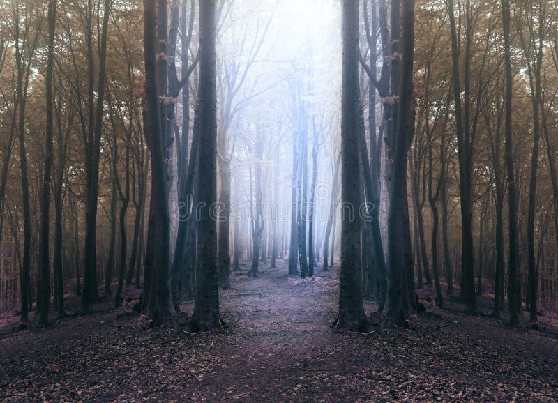 Griezelig blauw licht in mistig bos met cirkel van donkere bomen royalty-vrije stock fotografie