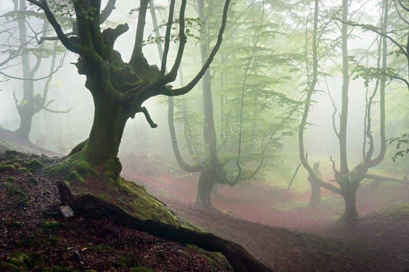 Griezelig bos met verschrikkingsbomen stock foto's