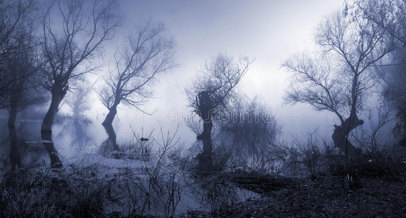 Griezelig, donker en mistig landschap royalty-vrije stock foto's