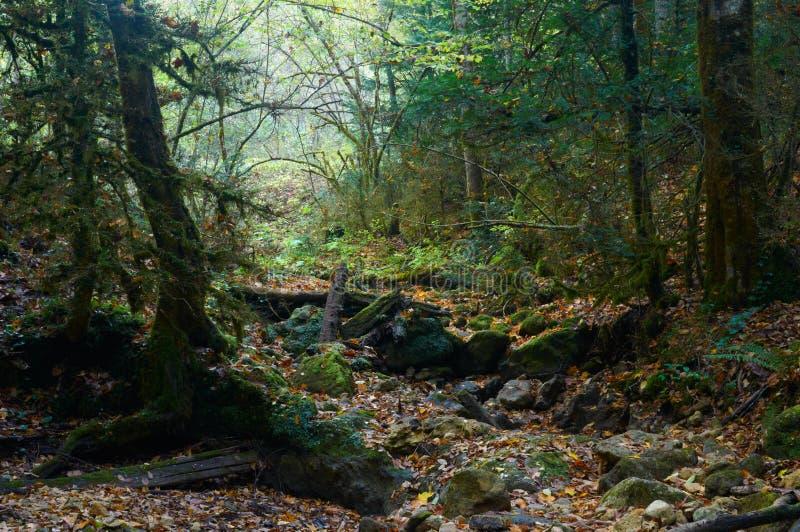 Griezelig Halloween-bos met een gevallen boom stock foto
