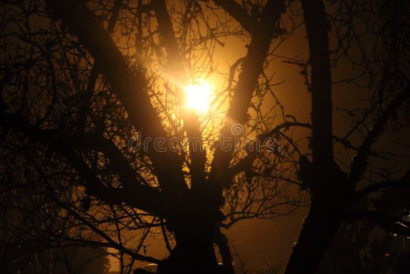 Griezelig licht door boom stock foto's