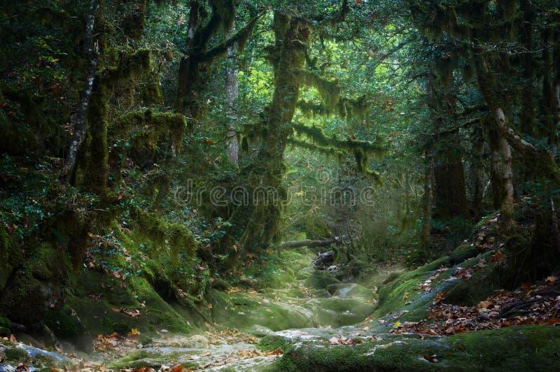 Griezelig nevelig de herfst bemost bos stock foto's