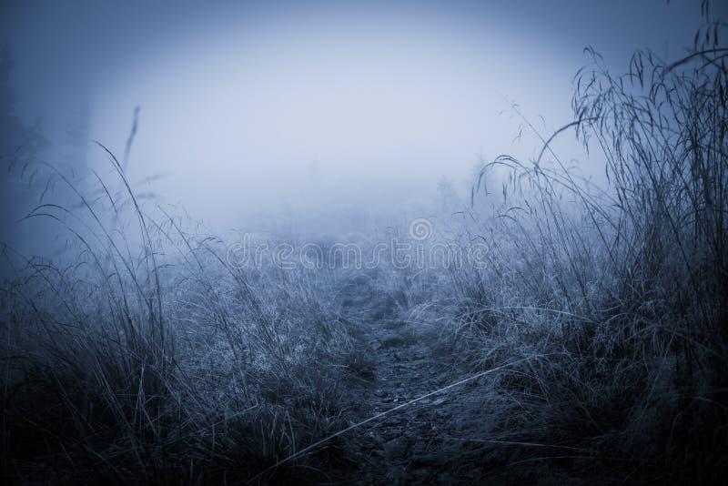 Griezelig nevelig regenachtig bos stock fotografie