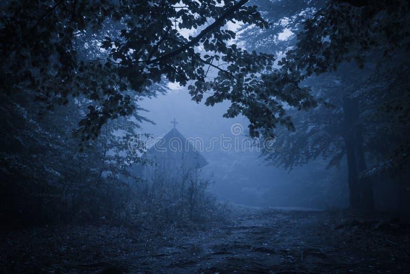 Griezelig nevelig regenachtig bos stock foto
