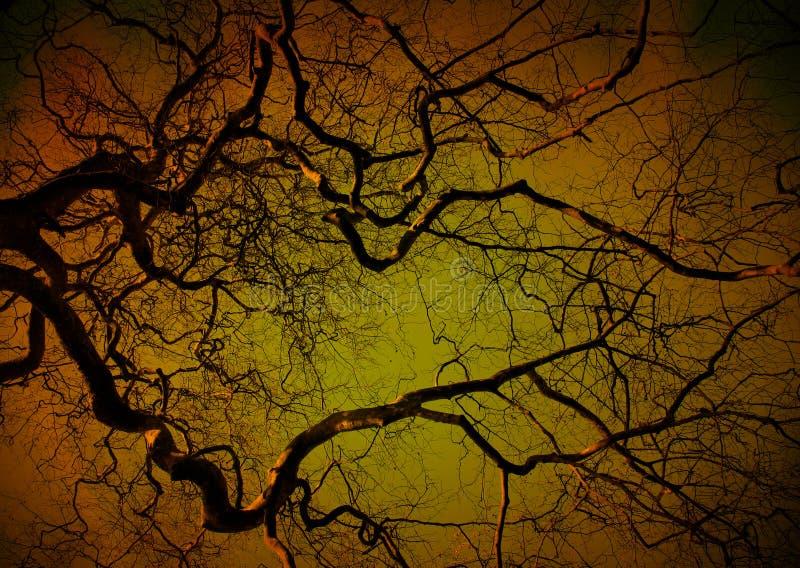 Griezelige boom bij nacht stock foto