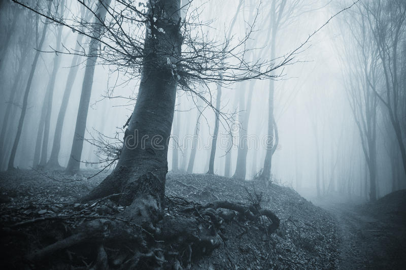 Griezelige boom in een koud bos met mist royalty-vrije stock foto