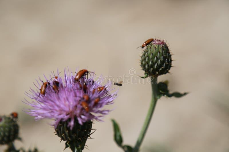 Griezelige insecten stock foto's