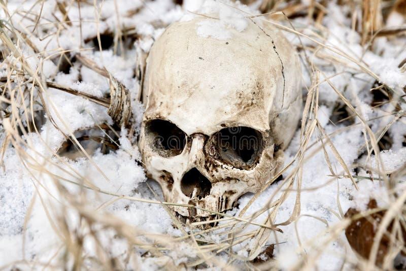 Griezelige menselijke schedel op de boom royalty-vrije stock foto