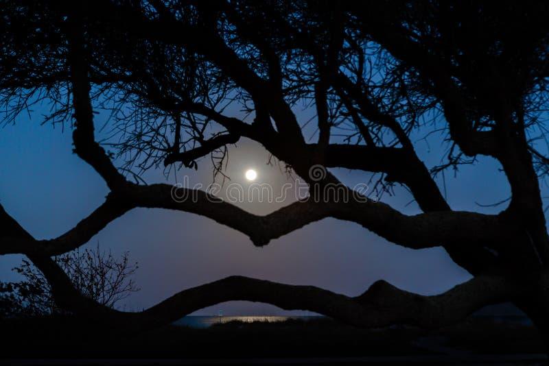 Griezelige nachtscène voor achtervolgd Halloween stock foto's