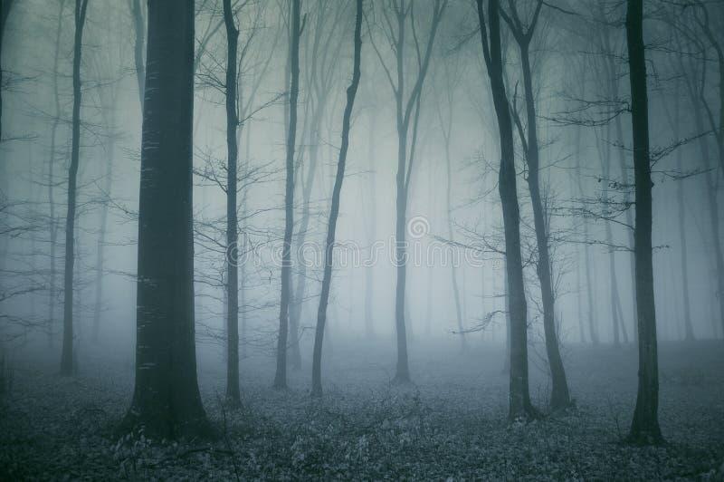 Griezelige scène van een donker bos royalty-vrije stock afbeelding