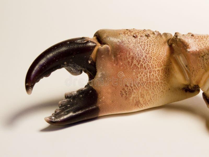 Griffe de crabe photographie stock libre de droits