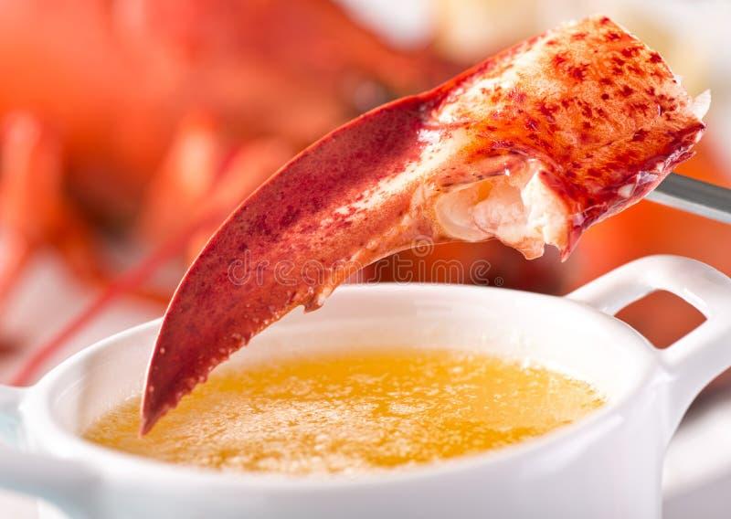 Griffe de homard avec du beurre fondu photographie stock