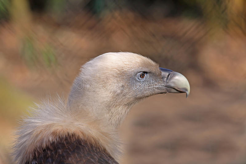 Download Griffon vulture stock image. Image of negative, financial - 23886661