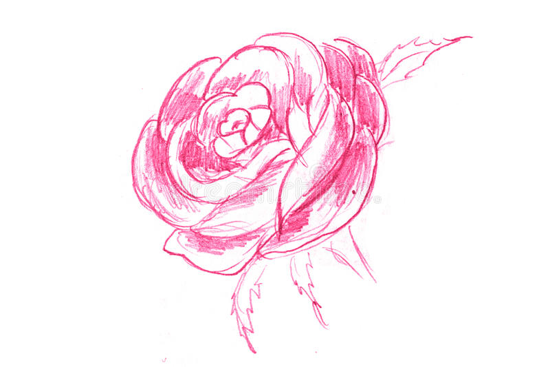 Griffonnage de Rose illustration stock