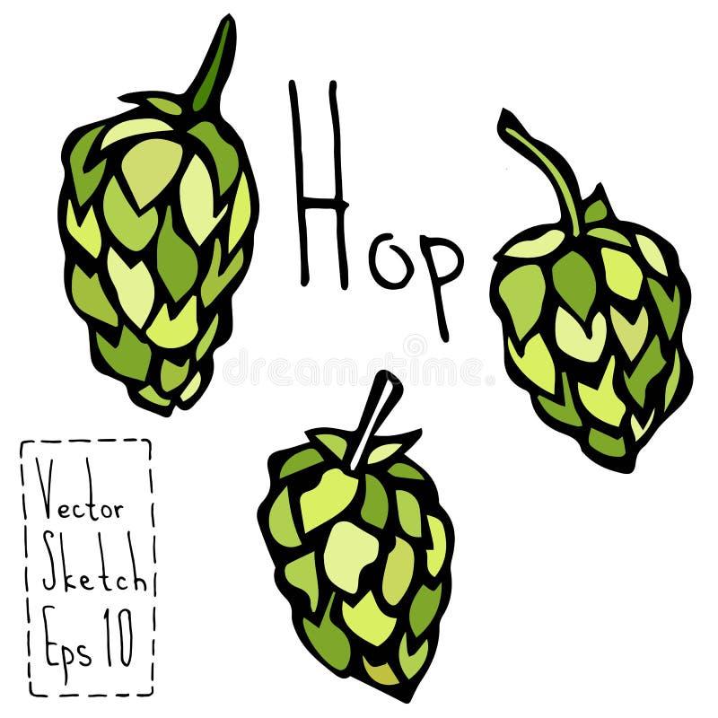 Griffonnage Sketsh d'houblon Illustration de vecteur de bière illustration stock