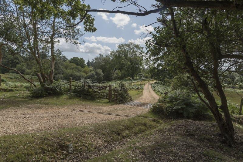 Griglia del bestiame e portone nuovo Forest Hampshire Regno Unito immagine stock libera da diritti