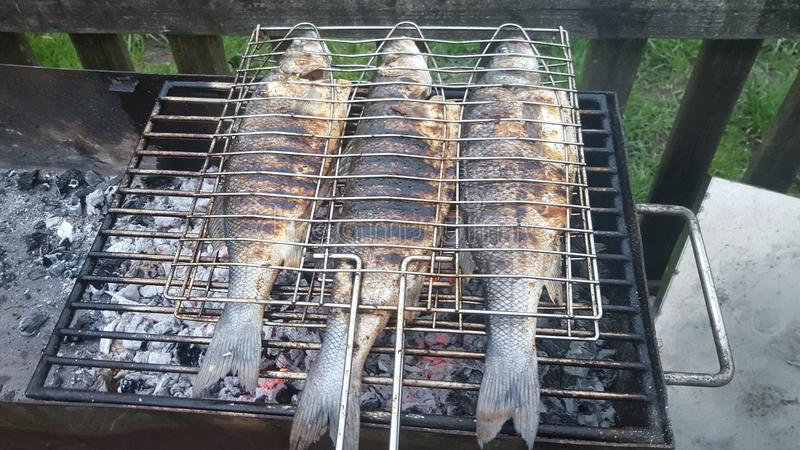 Griglia del pesce fotografia stock