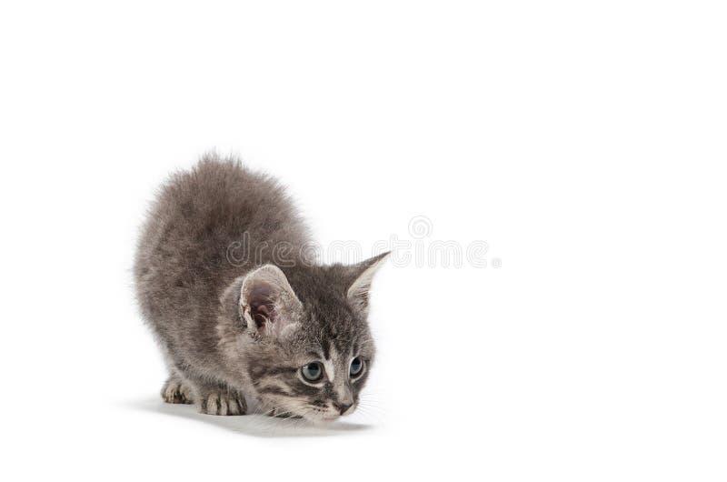 De snelle aanval van het katje stock foto's