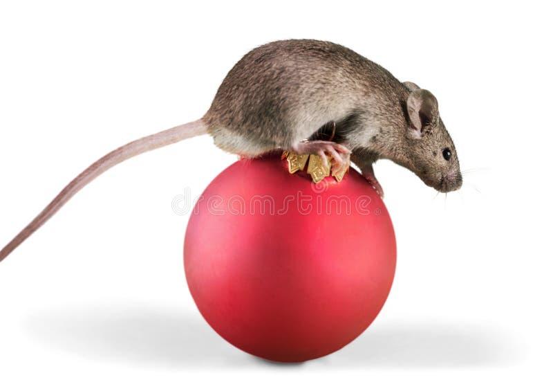 Grijs muisdier op bal op achtergrond stock afbeeldingen