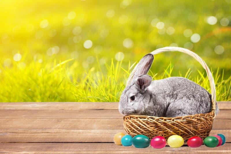 Grijs Pasen-konijn in een mand met eieren op een houten lijst, geit met een konijn in openlucht royalty-vrije stock foto