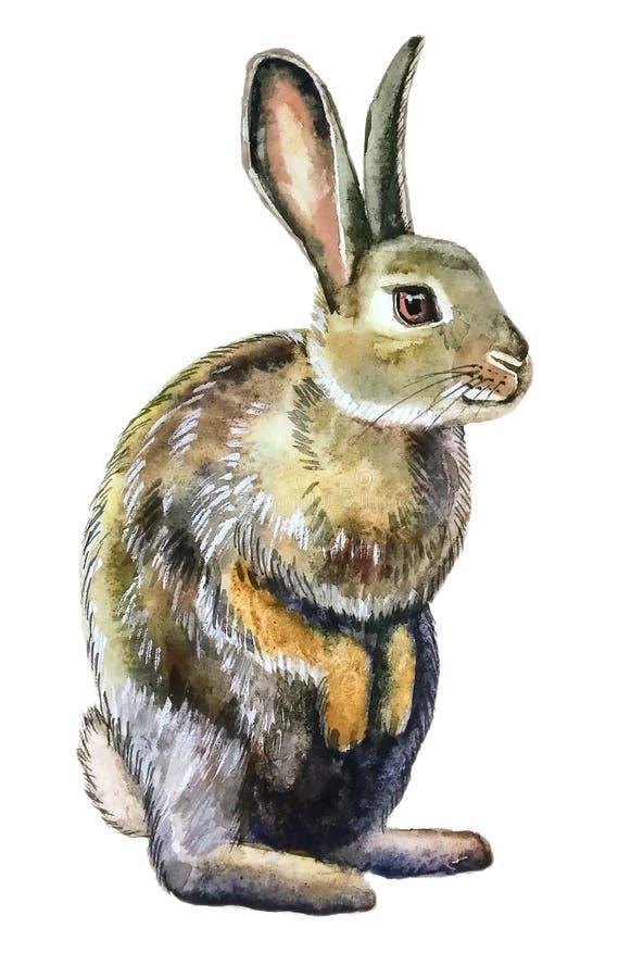 Grijs pluizig konijn met bruin oog stock illustratie