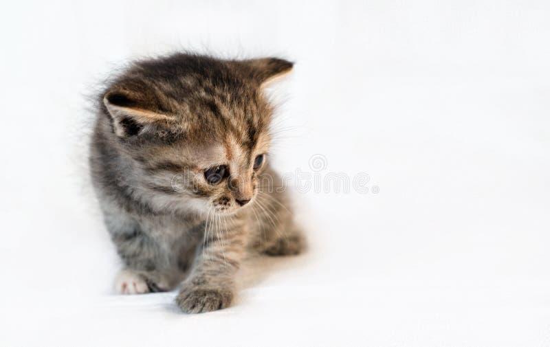 Grijs weinig katje stock afbeelding