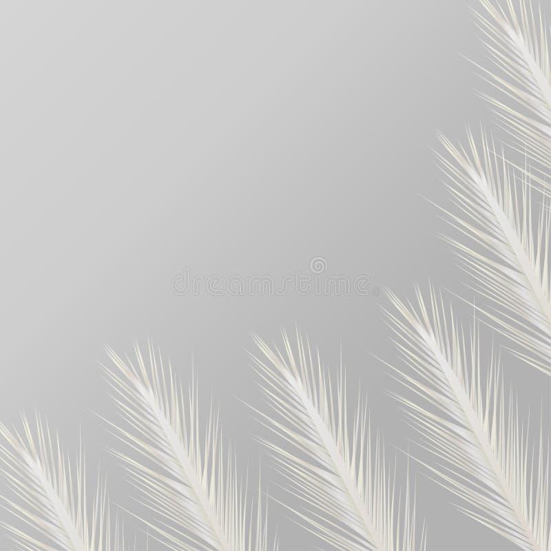 Grijze achtergrond met witte veren stock illustratie