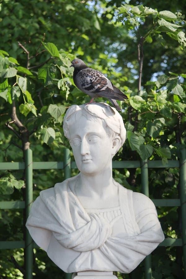 Grijze duifzitting op het hoofd van het monument royalty-vrije stock foto