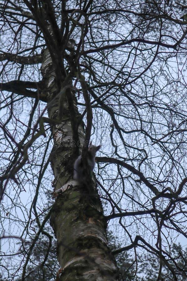Grijze eekhoorn die in de voeder eten stock foto