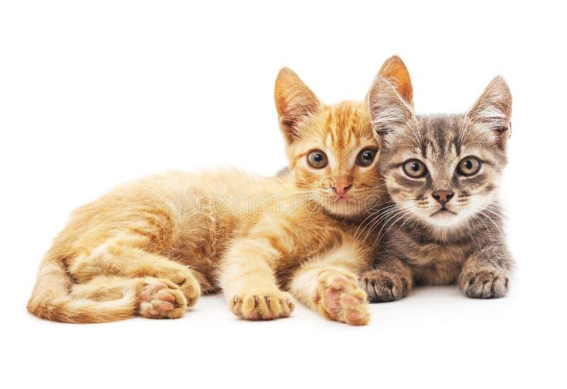 Grijze en rode katten royalty-vrije stock fotografie