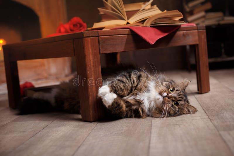 Grijze en Zwarte Tabby Cat Relaxing royalty-vrije stock afbeeldingen