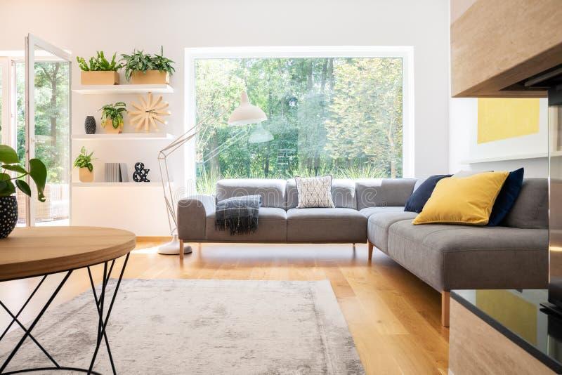 Grijze hoeklaag met kussens in echte foto van wit woonkamerbinnenland met venster, verse installaties, tapijt en grote lamp stock fotografie