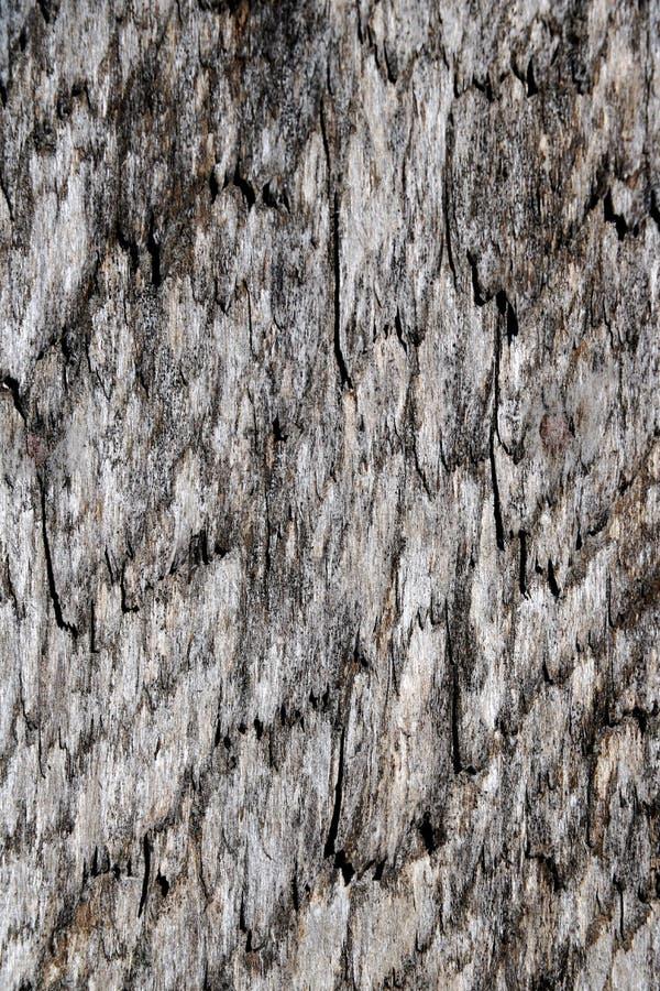 Grijze houten textuur Een oude raad stock afbeelding