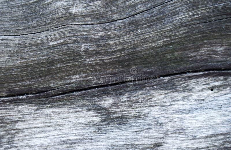 Grijze houten textuur macrofoto Witte en grijze houten achtergrond royalty-vrije stock afbeelding