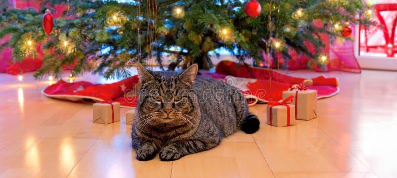 Grijze kat en Kerstmisboom royalty-vrije stock foto