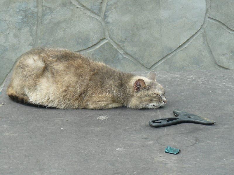 Grijze kattenslaap op de lijst stock foto's