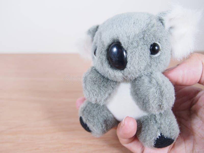 Grijze mooie Koalapop in palm stock afbeeldingen