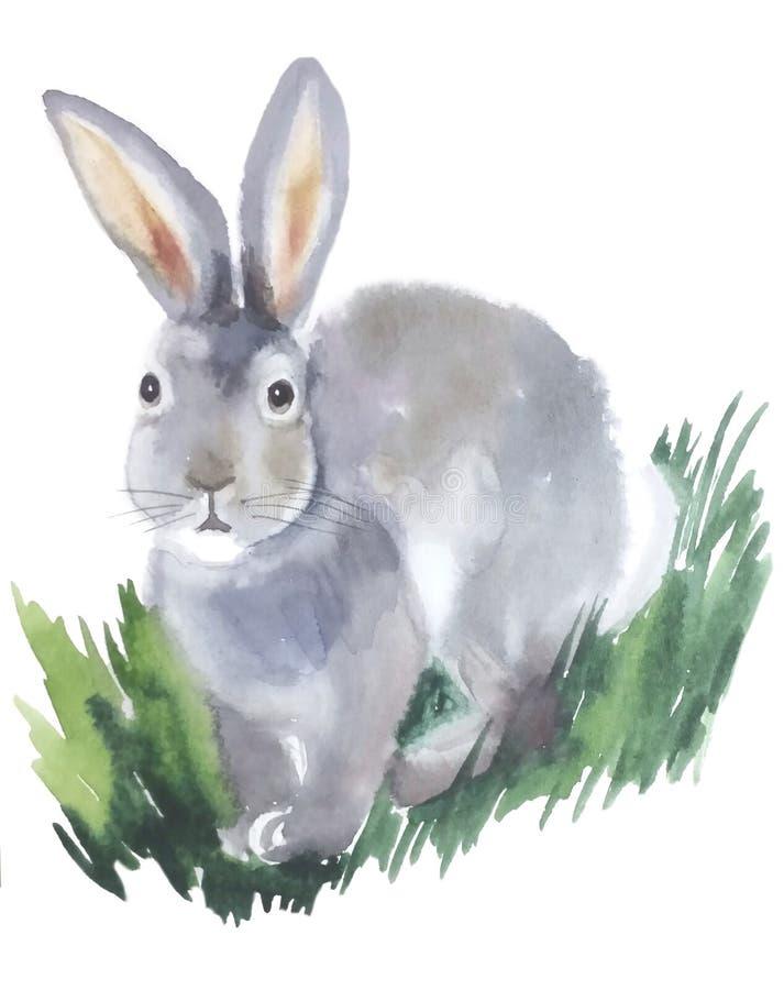 Grijze pluizige konijnzitting in het gras royalty-vrije illustratie