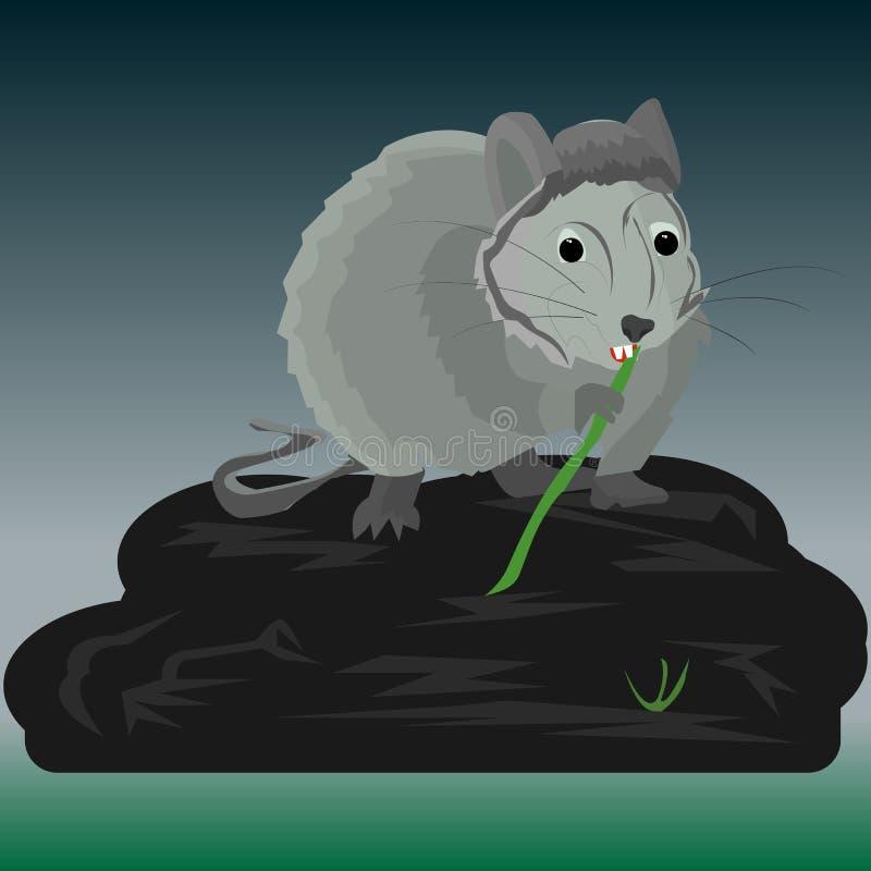 Grijze rat zit 's nachts op een grote steen in de buurt van een moeras en knijpels op bamboe stock illustratie