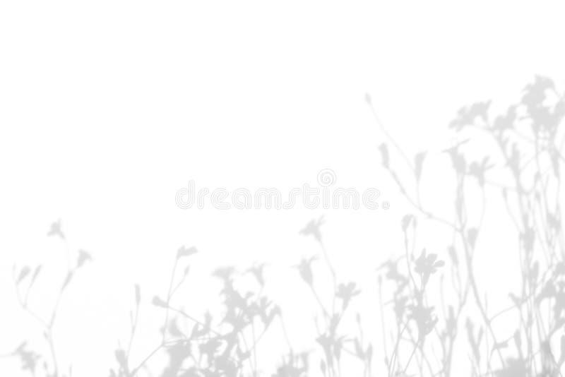 Grijze schaduwen van de bloemen en het gras royalty-vrije stock foto's