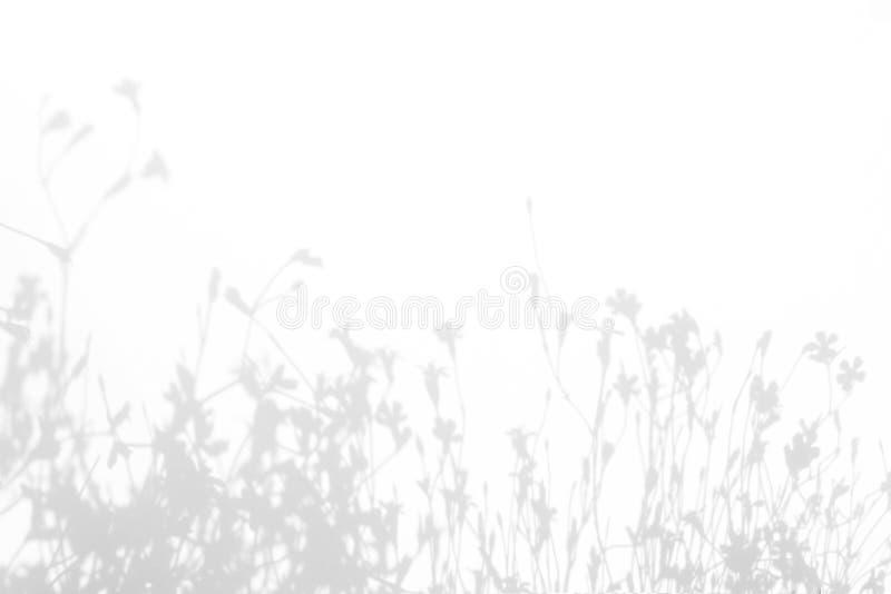 Grijze schaduwen van de bloemen en het gras royalty-vrije stock afbeeldingen
