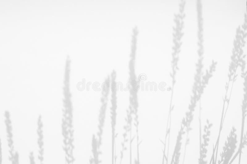 Grijze schaduwen van de bloemen en het gras royalty-vrije stock afbeelding