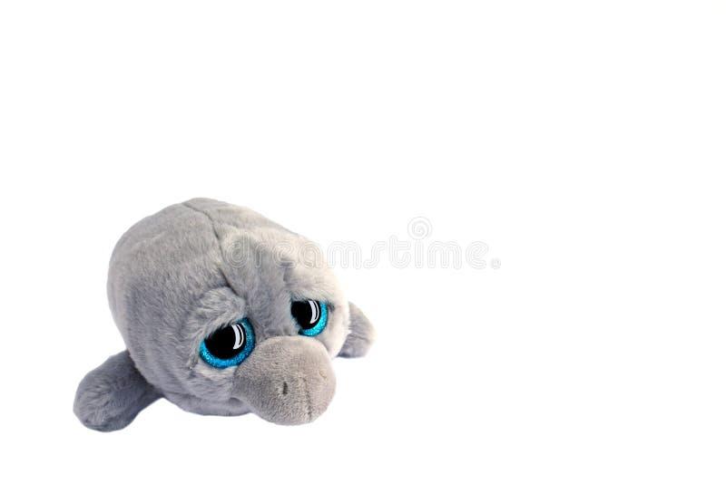 Grijze stuk speelgoed zachte dolfijn met grote zwarte en blauwe ogen met bezinning stock foto's