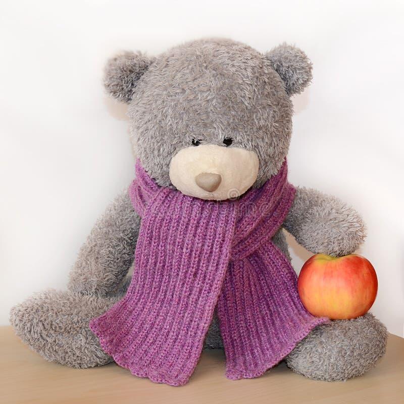 Grijze teddybeer in een purpere gebreide sjaal die een appel houden stock foto's