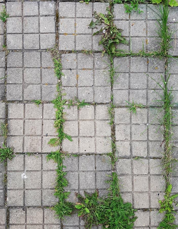 Grijze tegel met groen gras stock afbeeldingen