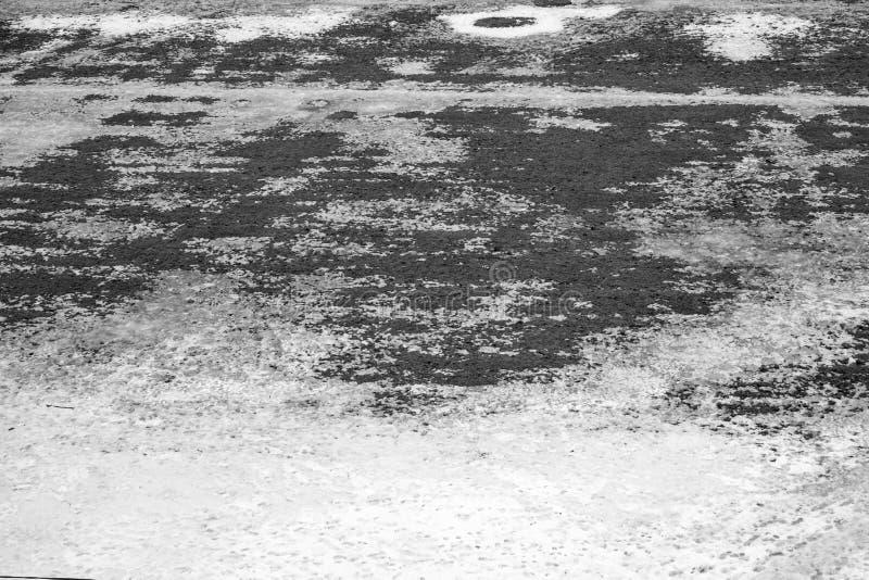 Grijze textuur van Gras het groeien door de sneeuwlente stock foto's