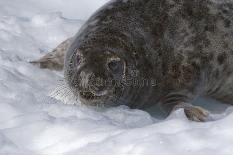 Download Grijze verbinding stock afbeelding. Afbeelding bestaande uit antarctica - 10779389