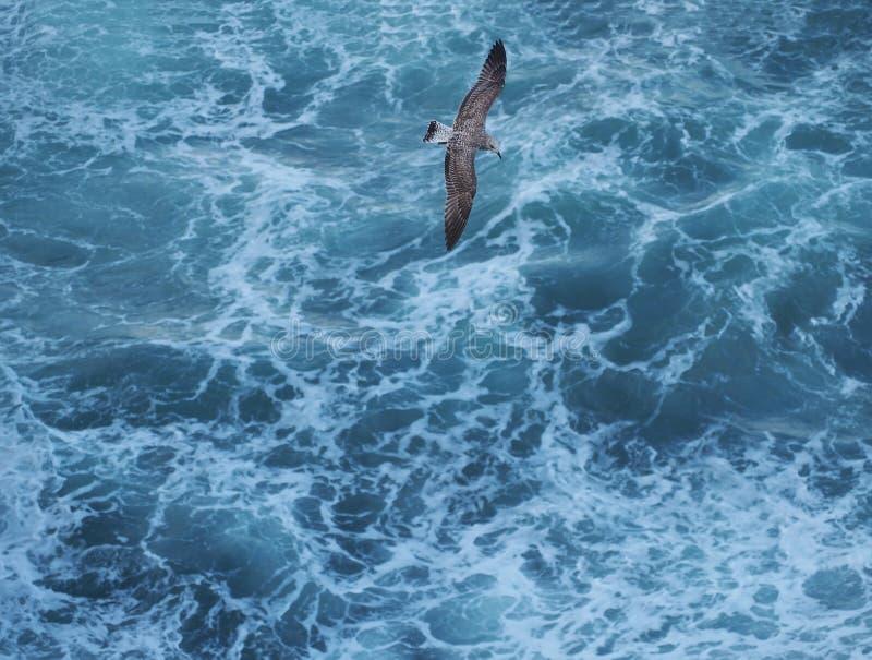 Grijze zeemeeuw die over blauwe ruwe overzeese hoogste mening vliegen stock foto's